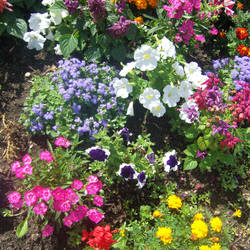 Hot Summer Flowerbed by 1389AD