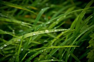 Grass Blades by alexkaessner