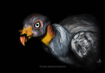 King Vulture (Sarcoramphus papa) by NadilynBeato