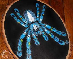 Gooty Sapphire Tarantula by NadilynBeato