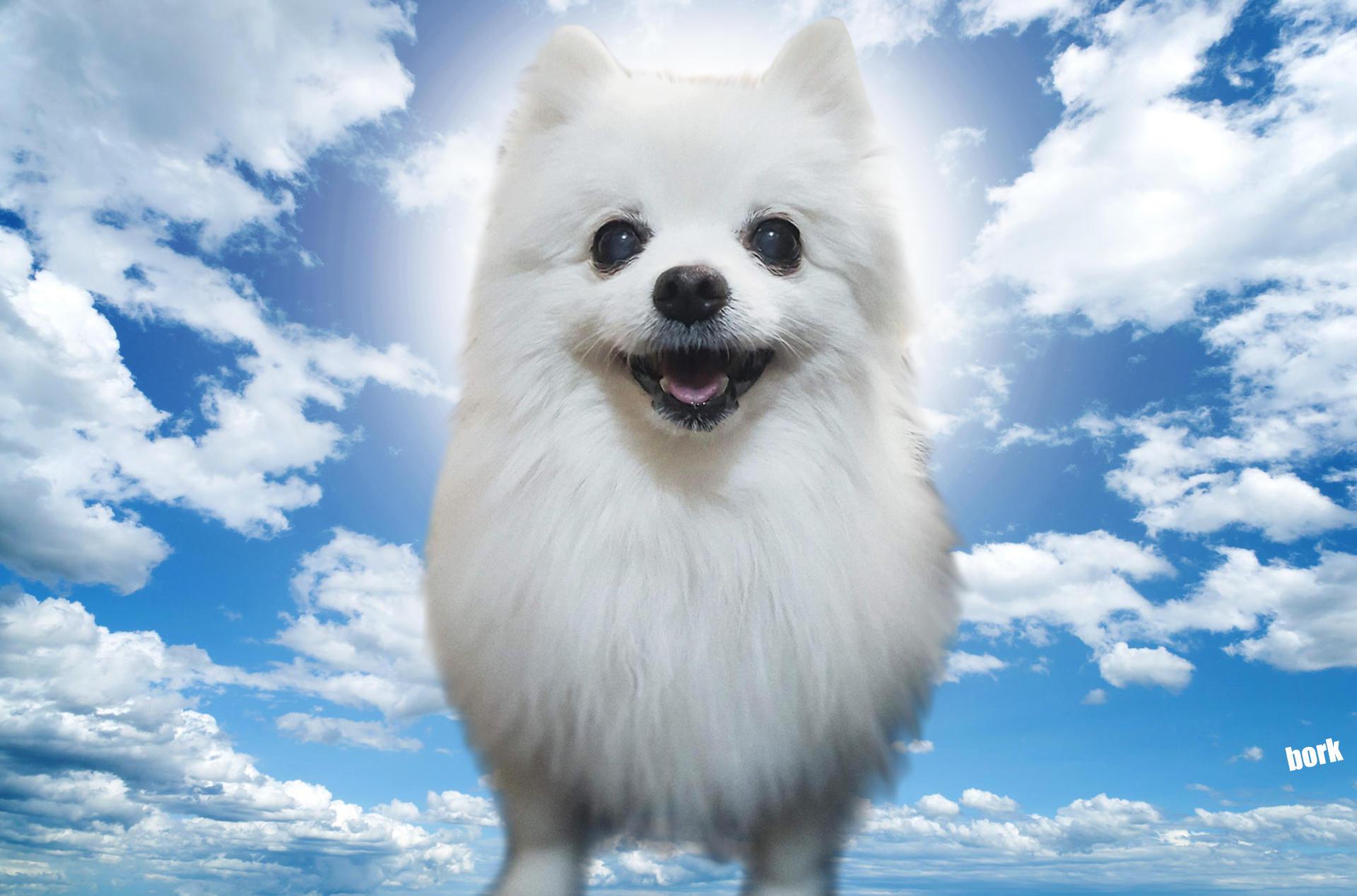 gabe the dog wallpaper