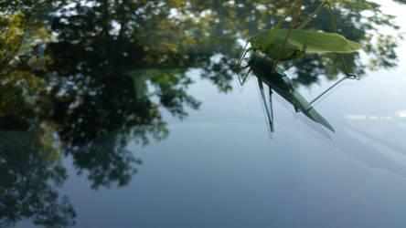 Grasshopper by kethrynrose