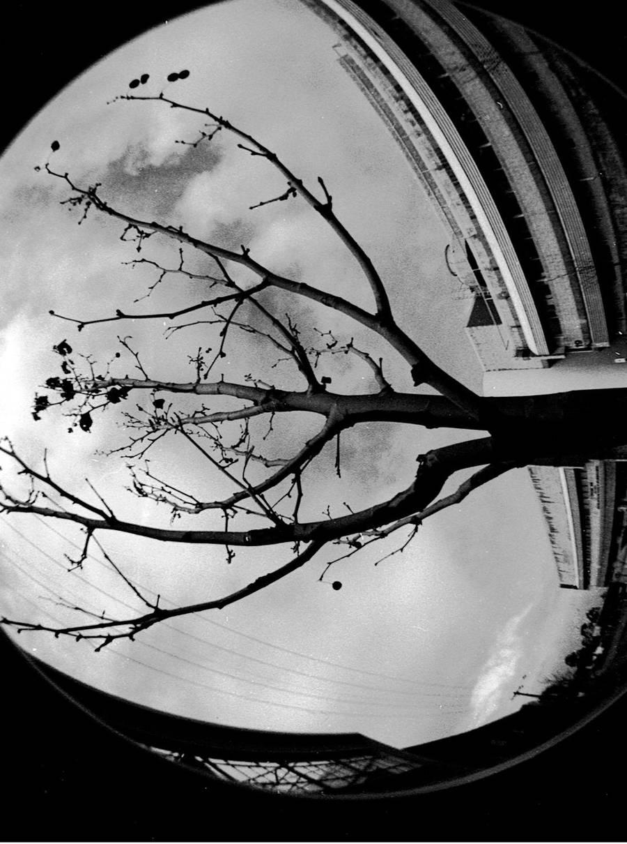 Fish Eyes: Tree by ohScorpio