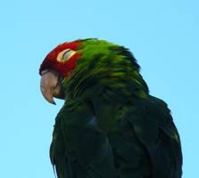 parrot enjoying the sunset by BrandonCWatson