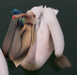 Bird Vore 26 by andromeda111