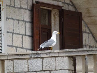 Seagull by theOwtcast