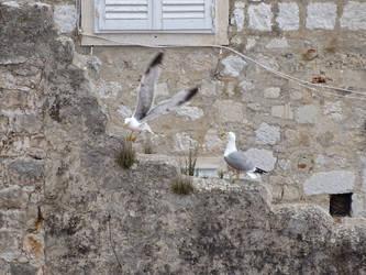 Seagulls by theOwtcast