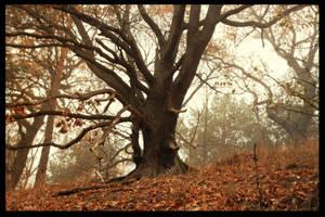 All season beauty by Hluthvik
