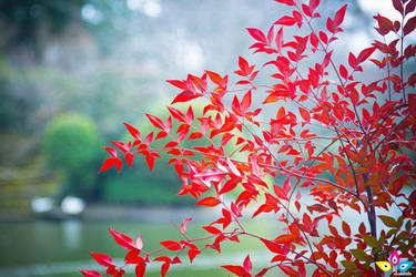 Autumn Red by lilmarie