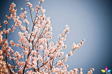 Sweet blossoms by lilmarie
