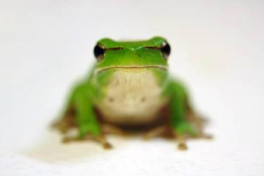 Kermit 1 by bivoirart