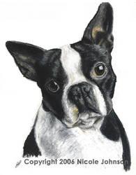 Boston Terrier by bivoirart