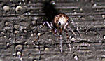big creepy spider by aeiryn
