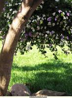 The Flower Tree by aeiryn