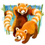 Red Panda BC by CrazyCatDesigns