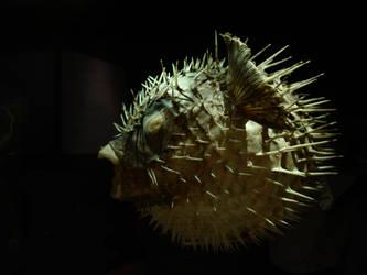 Darwin's fish by MickelHiwatari