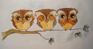 Owls by BettyNobs