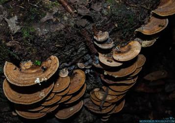 Shrooms by Moohoodles