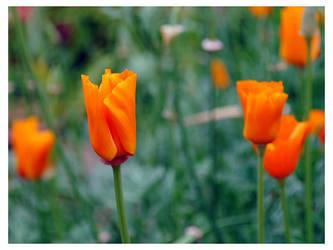 orange 2 by turulato