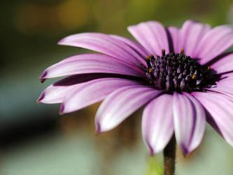 flor morada 8 by turulato