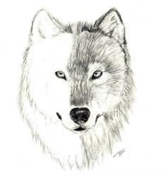 Wolf WIP by H3llzAng3l