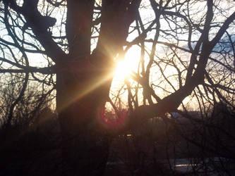 Sun set thru the trees 2 by starman077