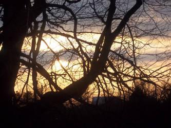 Sun set thru the trees by starman077