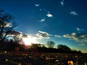 Spring Field by dan4815