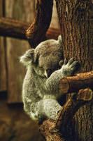 Koala by TheEmpatheticCat