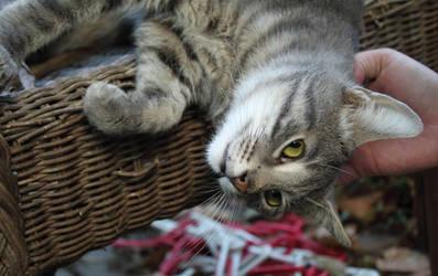 Feline Affection by TheEmpatheticCat