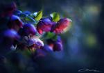 Midnight flowers by MaaykeKlaver