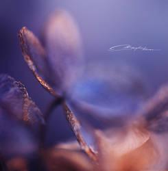 Soft beings II by MaaykeKlaver