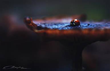 Autumn ladybird by MaaykeKlaver