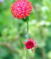 Flower by jamesvendra