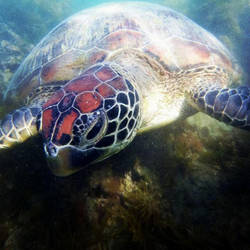 Catseye Beach Turtle by todo-mahem