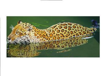 jaguar swimming by riodream