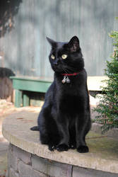 Sitting Black Cat by Horselover60-Stock