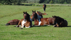 Herd in pasture by Horselover60-Stock
