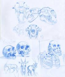 i like skulls by mir-ahmad