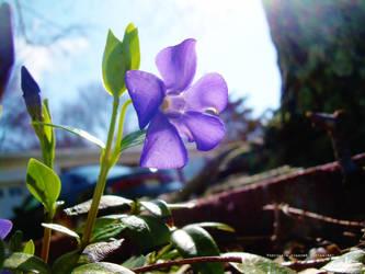 violet by ashfallenstudios