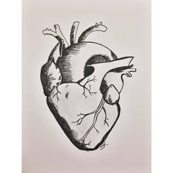 Human heart sketch by obsessive-fan-girl