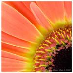 Orange sun by Lidija-Lolic