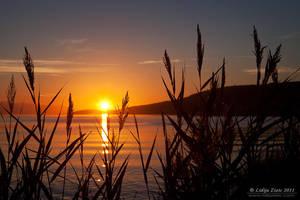 Good morning sun by Lidija-Lolic