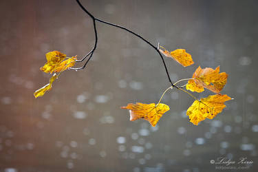 On a rainy day by Lidija-Lolic