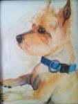 My Dog Furley by pythonorbit