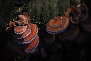 Mushroomopolis by cnv