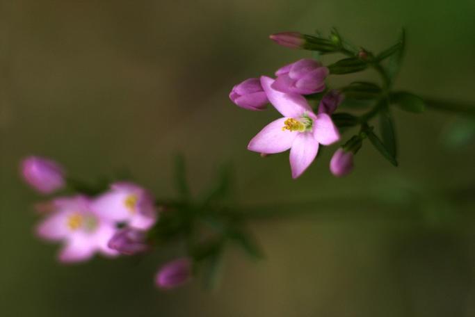 Flower rhymes by cnv