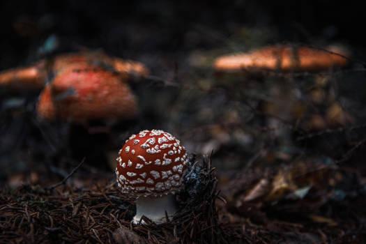 Fungi II by mabuli