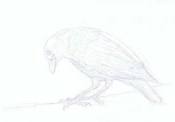 Colouring Picture - Crow WIP by YikYik