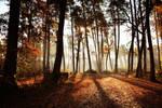 Autumn Forest by SztukmistrzzRoztocza